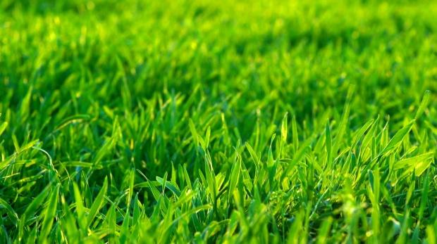 Grön gräsmatta